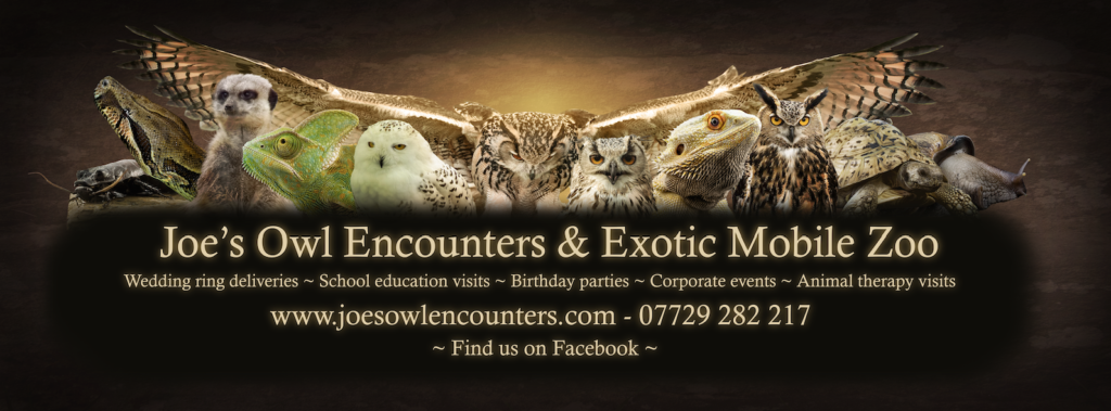 Joe's Owl Encounters