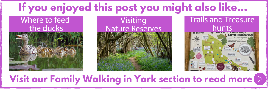 Read more about Family Walking in York