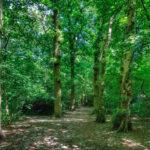 Acomb woods