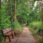 Askham Bog a woodland walk near york