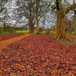 Beningbrough Hall York woodland walk