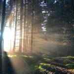 Woodland with sunlight