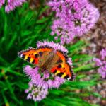 butterfly on flowers woodland walk in York